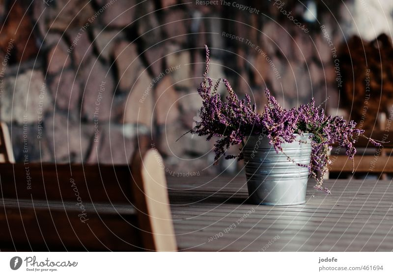 They are placed Wood Simple Loneliness Table Feces Plant Flower Heather family Decoration Firewood Restaurant outdoor area Violet Pink Lonely Deserted Guest