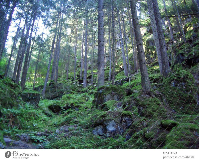Ötztal fairytale forest Forest Europe Austria Ötz Valley Home country Enchanted forest Tree Large Thin Green Light Bright Sun's position Wood flour Eerie