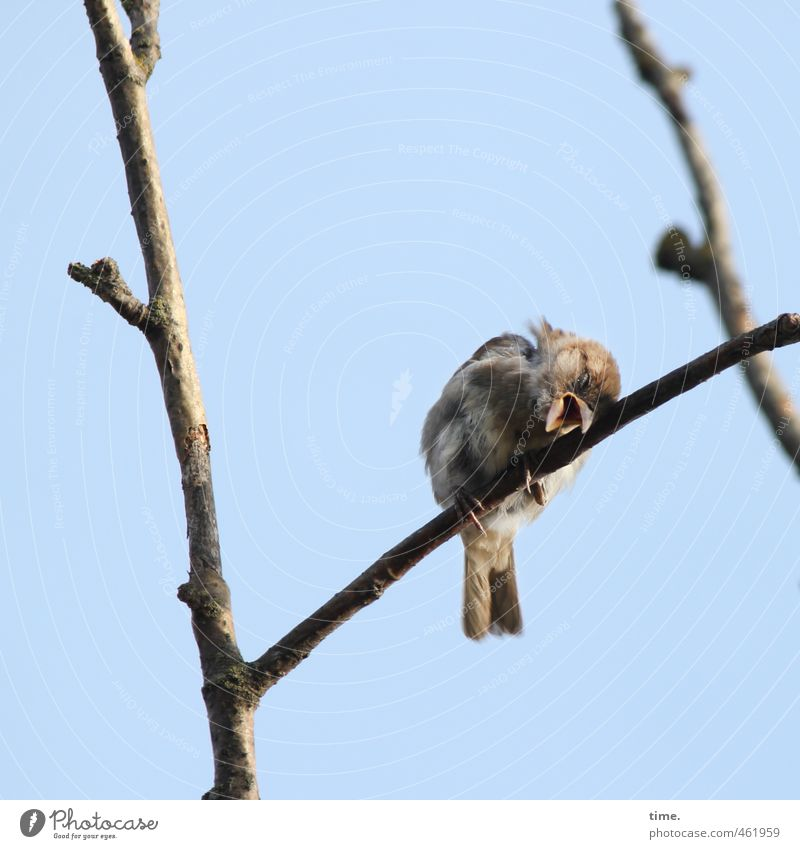 Sky Nature Tree Loneliness Animal Environment Baby animal Life Autumn Funny Small Bird Sit Authentic Beautiful weather Cute