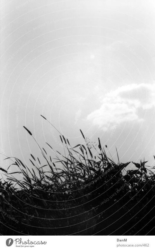 summer 2k 1 Grass Nature Elbe