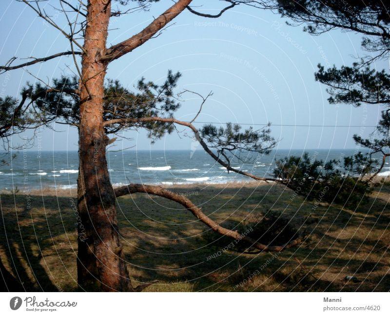 Tree Ocean