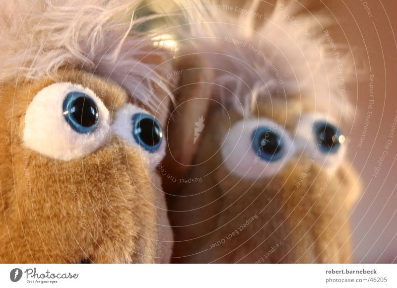Can those eyes lie? Cuddly toy Animal Plush Mirror Cloth Pupil Eyes Doll's eyes Mirror image Partially visible Facial expression Goggle eyes