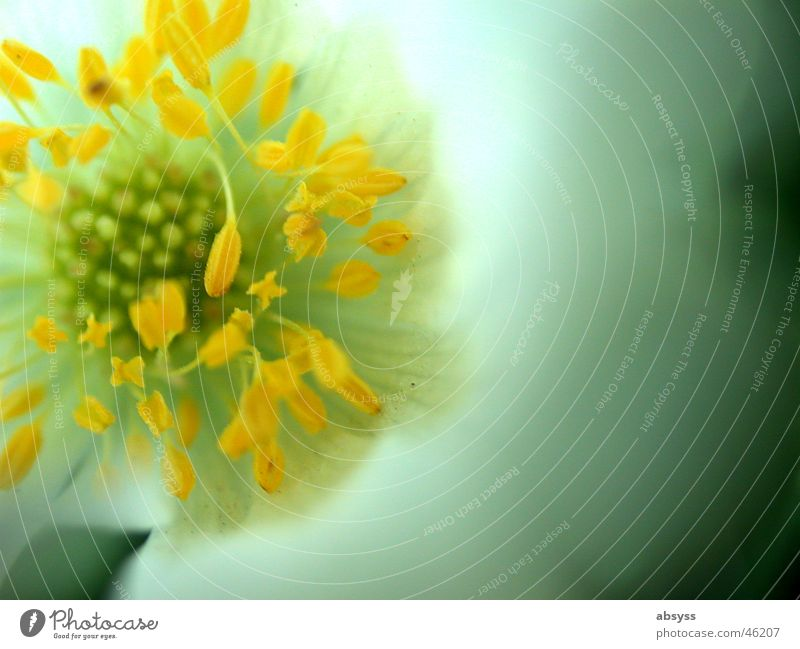Nature White Flower Green Blue Plant Yellow Blossom Spring Orange Pistil Blossom leave Zoom effect Calyx Enlarged Spring flowering plant