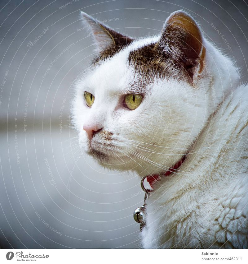 Black and white gray with a little green. Animal Pet Cat Animal face Pelt Cat eyes Whisker Ear Neckband 1 Cute Green White Happy Contentment Watchfulness