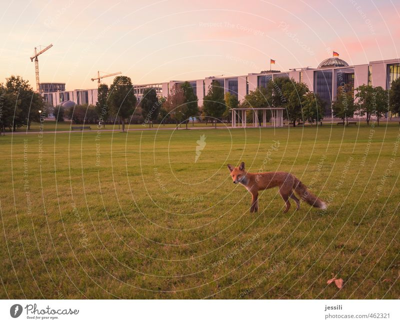 ... wait and see III Education Workplace Meeting Animal Autumn Beautiful weather Meadow Downtown Berlin Spreebogen Spreebogen Park Germany Europe Capital city