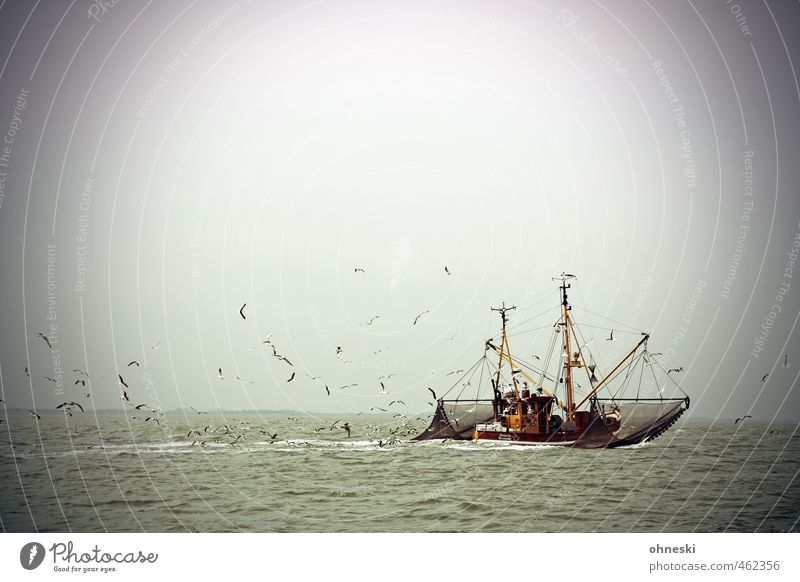 Everything in balance Fishery Elements Water North Sea Ocean Navigation Fishing boat Crab cutter Bird Seagull Flock Adventure Freedom Colour photo