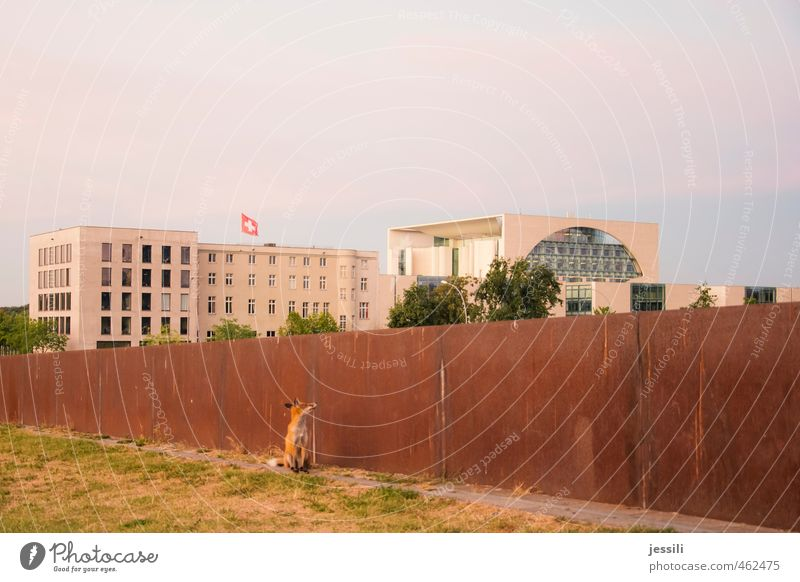 ... wait and see II Animal Autumn Beautiful weather Downtown Berlin The Wall Capital city Building Wall (barrier) Wall (building) Tourist Attraction Wild animal