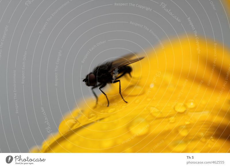 Nature Animal Yellow Freedom Small Rain Fly Authentic Wet Adventure Near