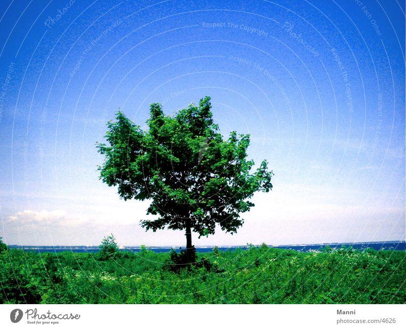 tree Tree Sky Water