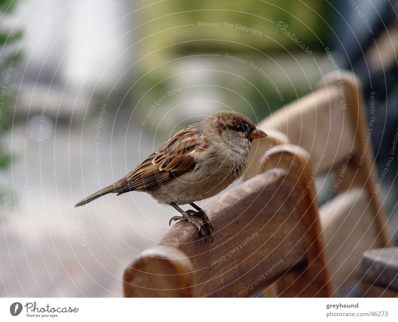 Bird Chair Sparrow Beg