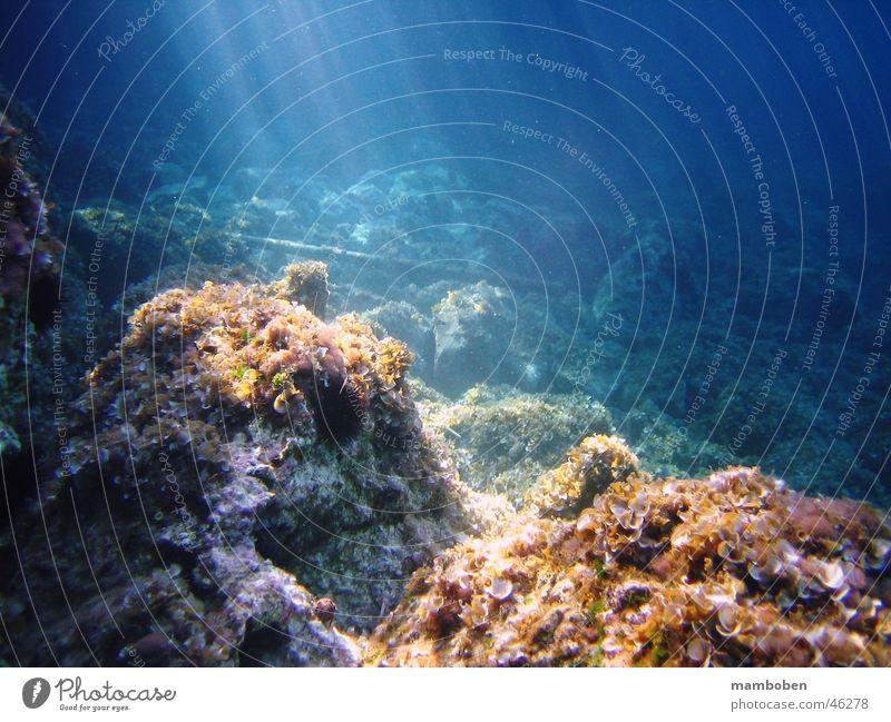 Rays of Light Ocean Underwater photo Beam of light Blue Water Fish Stone Rock