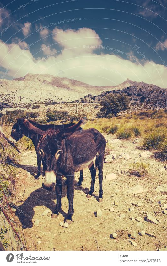 Sky Nature Vacation & Travel Summer Landscape Clouds Animal Environment Mountain Warmth Travel photography Horizon Gloomy Pair of animals Elements Cute