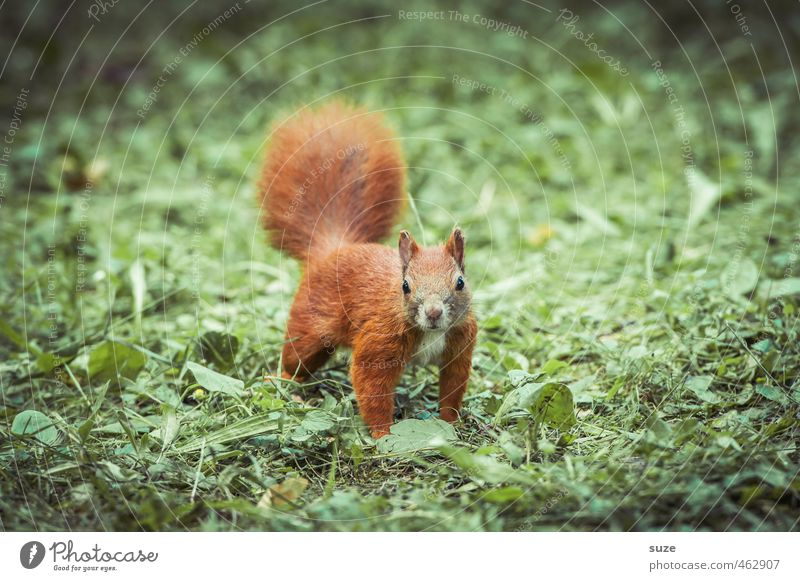 Animal in the red fog Nature Grass Meadow Wild animal 1 Small Curiosity Cute Green Red Rodent Squirrel Pelt Animalistic Colour photo Multicoloured Exterior shot
