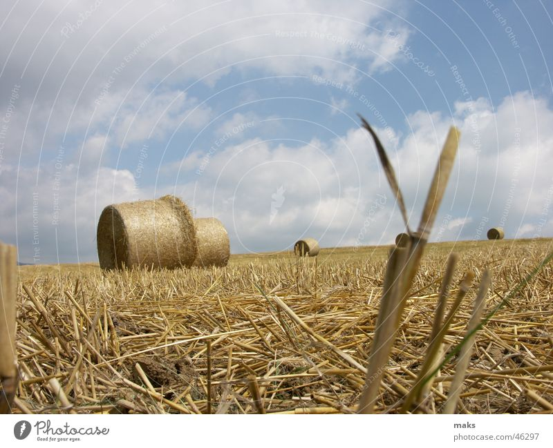 Sky Blue Clouds Yellow Field Blade of grass Straw Bale of straw