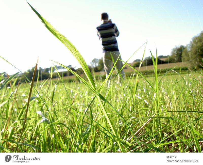 Sky Nature Youth (Young adults) Blue Freedom Grass Bright Photography Background picture Photographer Interest Worm's-eye view Foreground