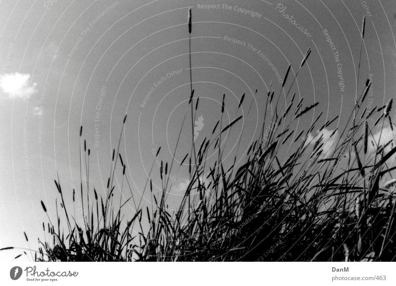 Nature Grass Elbe