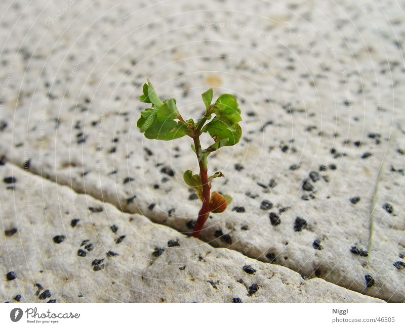 The power of nature Plant Plantlet Stone floor To break (something) Growth Green Furrow Power Nature niggl