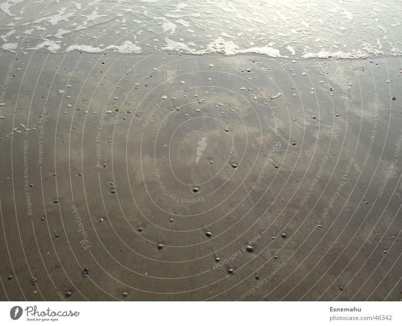 Water White Ocean Beach Dark Sand Bright Brown Waves Mussel Foam