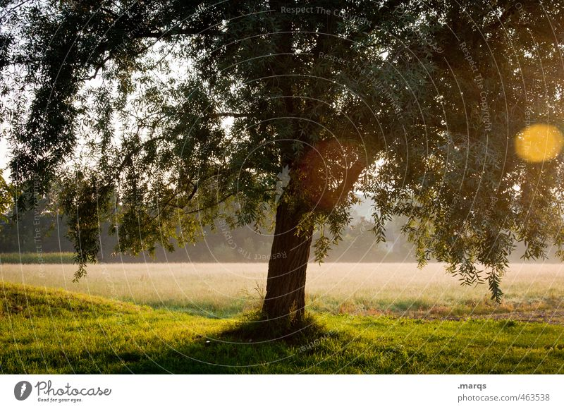 light Environment Nature Landscape Sunlight Summer Climate Beautiful weather Tree Park Meadow Illuminate Growth Esthetic Healthy Moody Life Tree trunk Leaf