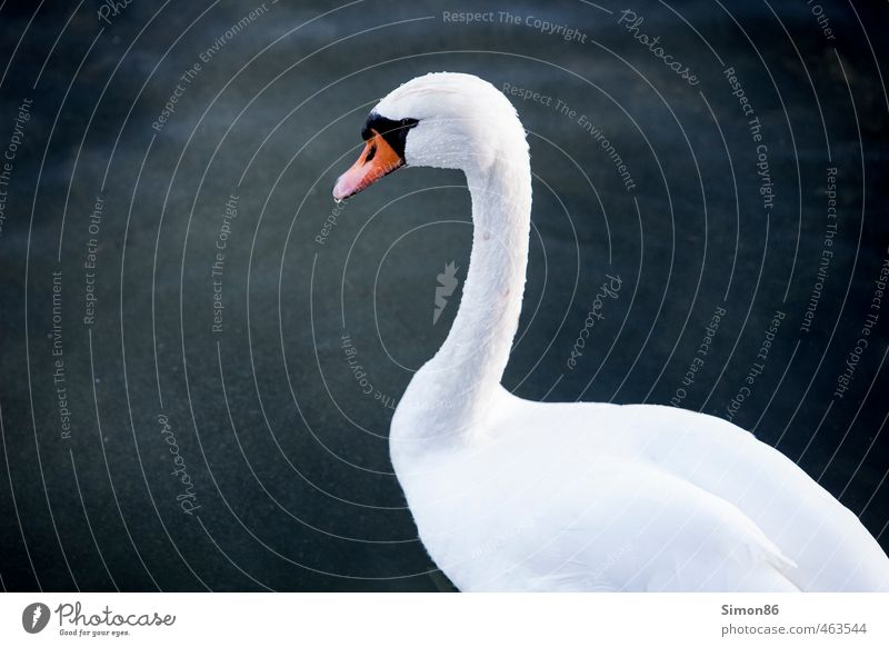 Nature Beautiful Water White Animal Environment Autumn Swimming & Bathing Lake Exceptional Bird Wild animal Esthetic Drops of water Observe Clean