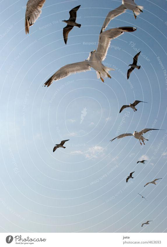 Sky Vacation & Travel Summer Sun Life Freedom Bird Flying Wild Energy Threat Group of animals Wing Curiosity Appetite