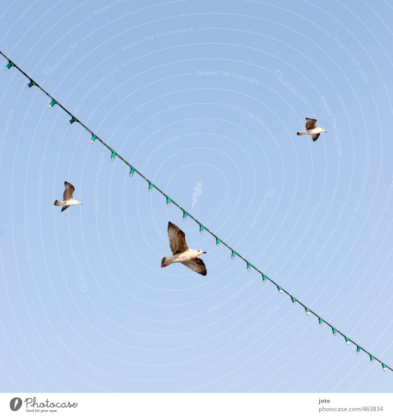 2+1 Cloudless sky Summer Ocean Navigation Ferry Seagull 3 Animal Group of animals Flying Free Infinity Attachment Fairy lights Vacation & Travel Bird Wing