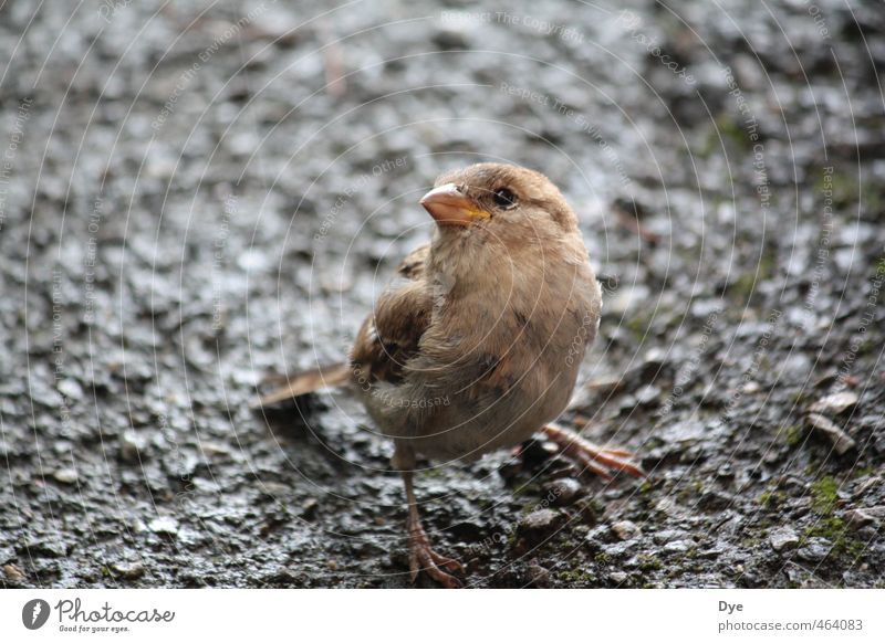 Bird's eye view 1.0 Nature Earth Sand Animal Wild animal Animal face Looking Sparrow Feather Beak Shallow depth of field Comical Cute Stone Dank Colour photo