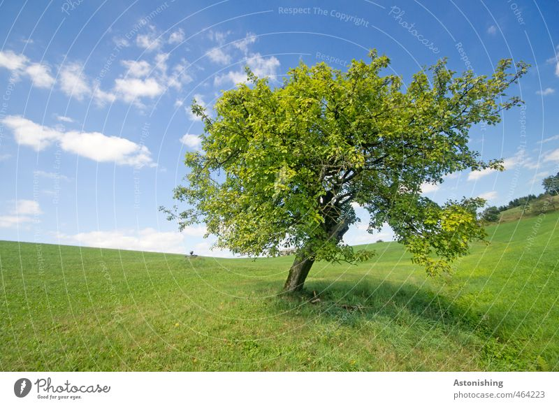 favourite tree Environment Nature Landscape Plant Air Sky Clouds Horizon Summer Weather Beautiful weather Warmth Tree Grass Leaf Foliage plant Meadow Hill Stand