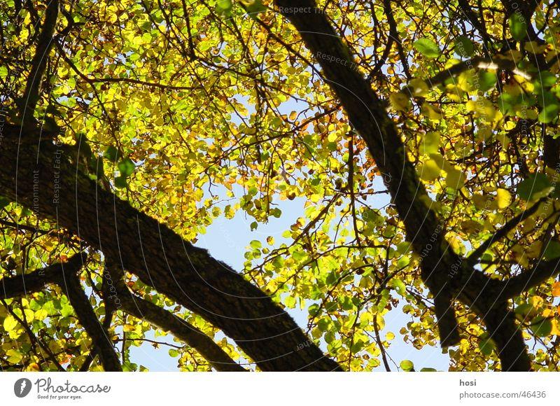 Nature Tree Sun Leaf Colour Forest Autumn Branch