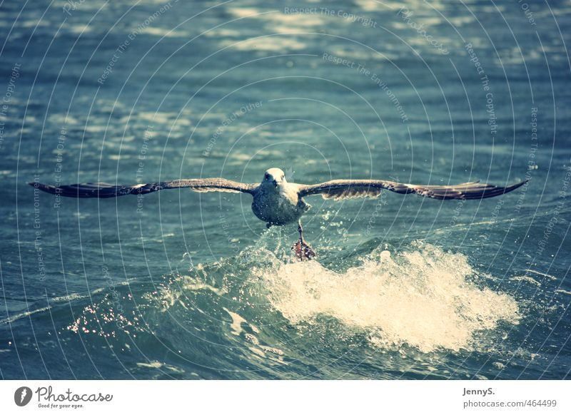 Nature Vacation & Travel Blue Water White Summer Ocean Relaxation Animal Far-off places Life Freedom Moody Air Bird Flying