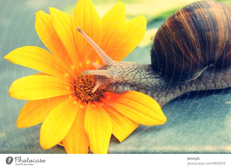very slowly Nature Plant Animal Flower Blossom Exotic Snail 1 Stone Natural Slimy Beautiful Multicoloured Yellow Spring fever Warm-heartedness Mobility