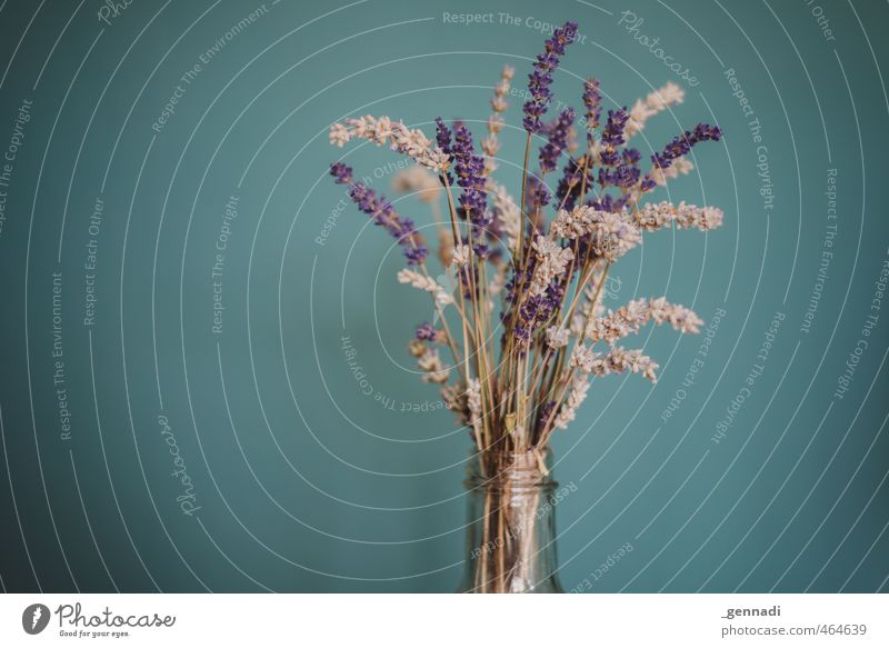 Blue Plant Blossom Natural Violet Bottle Lavender Vignetting Houseplant Neck of a bottle Flower arrangement