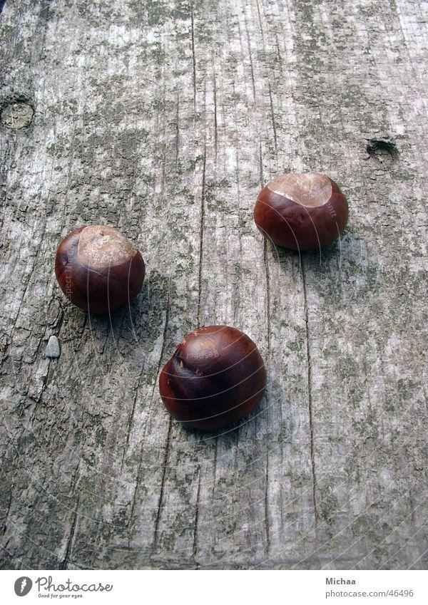 chestnuts Autumn Calm Chestnut tree Death Close-up