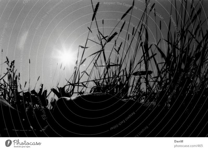 summer 2k 4 (K.) Grass Nature Human being Elbe