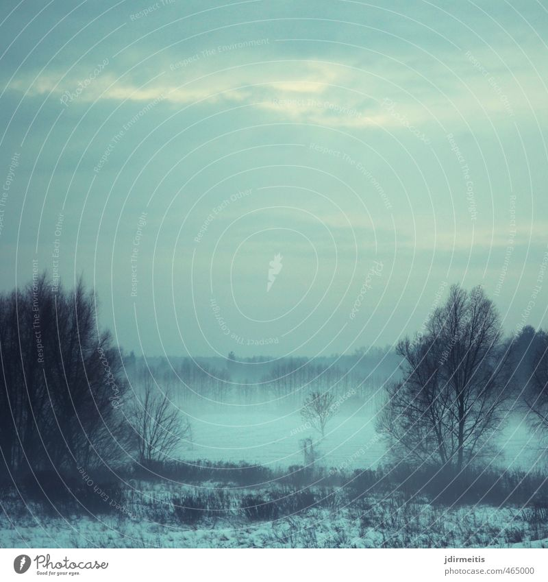 wafts of mist Environment Nature Landscape Winter Weather Fog Tree Grass Bushes Field Colour photo Exterior shot Twilight Central perspective