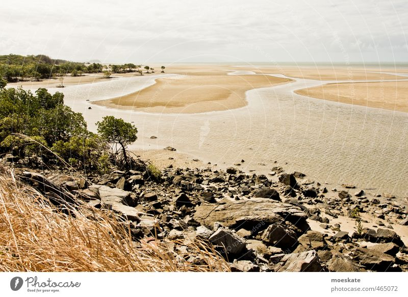 Mangroves on the beach Sand Water Sky Clouds Summer Tree Beach Ocean Pacific Ocean Caribbean Sea Warmth Vacation & Travel Low tide Australia Stone Colour photo