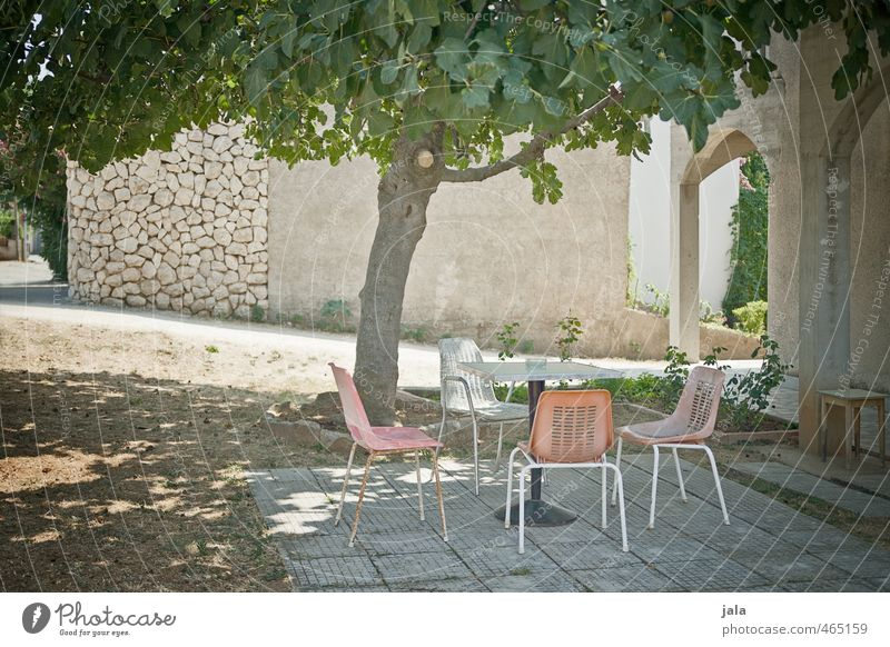 seat Garden Chair Table Plant Tree Fig tree Croatia House (Residential Structure) Manmade structures Building Facade Terrace Discover Relaxation Colour photo