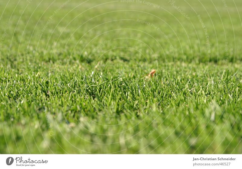 Green Grass Field Lawn Football pitch