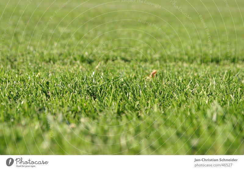 lawn Football pitch Green Grass Field Lawn