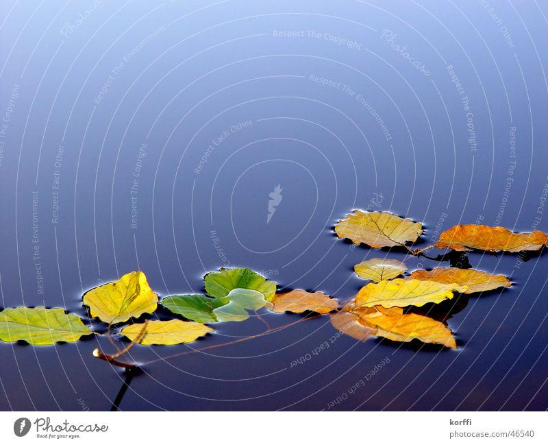 Calm Autumn Twig