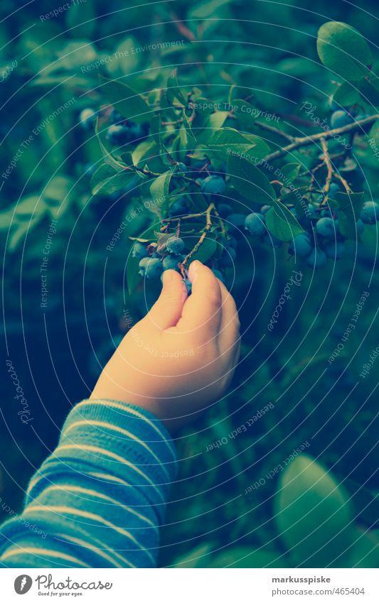 Child Nature Hand Landscape Joy Eating Garden Food Masculine Fruit Infancy Bushes Fingers Harvest Toddler Collection