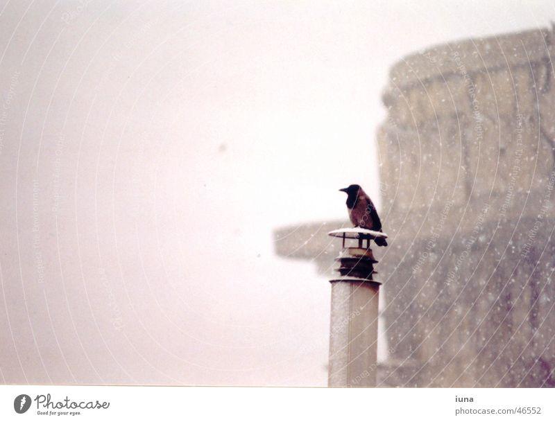 ravenous weather Raven birds Crow Loneliness Think Black Cold Vienna Exterior shot Winter Bird Snowflake Fog Monument flag tower warm feet Chimney