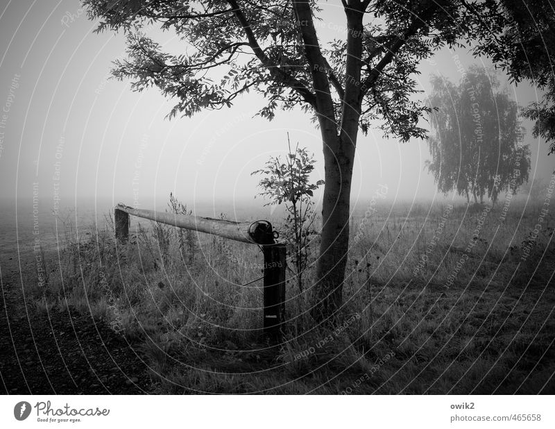 Nature Plant Tree Landscape Calm Far-off places Environment Sadness Autumn Wood Moody Horizon Weather Field Fog Growth