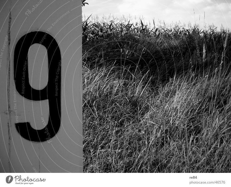 Rhine - Number Nine Cologne Field Digits and numbers 9 Kilometer Watercraft Bonn Promenade Black White Nature Stone Measure Service nine River Coast Contrast