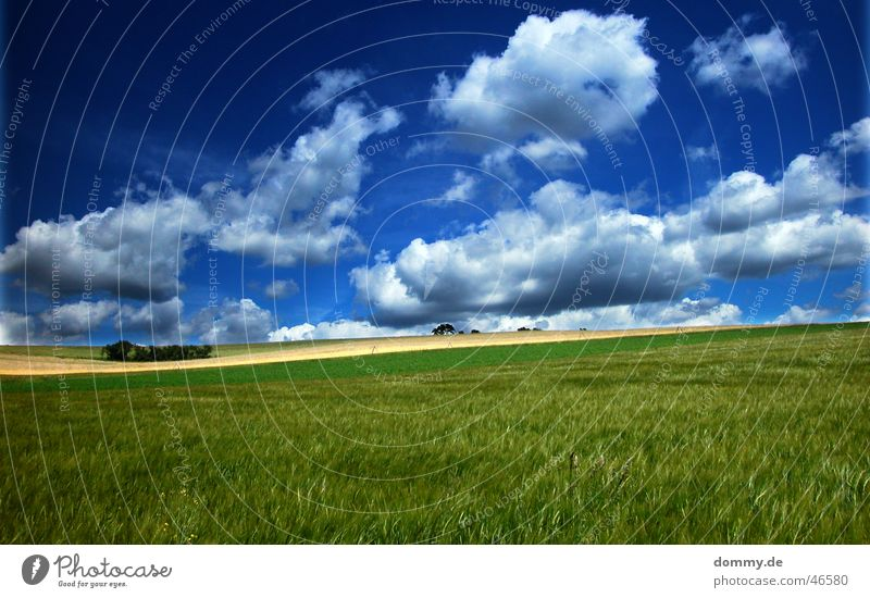Tree Sun Green Blue Summer Clouds Colour Meadow Window Field Multiple Strong Americas Franconia Curve Würzburg