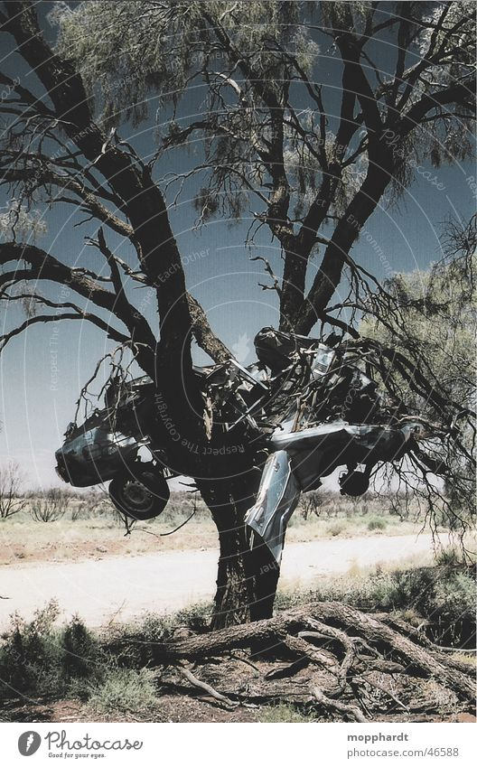 car crash Tree Accident Outback Scrap metal Australia Bulge Scratch mark Summer Physics Progress Grass Transport Car Metal Rust Sky Varnish Warmth Sun Street