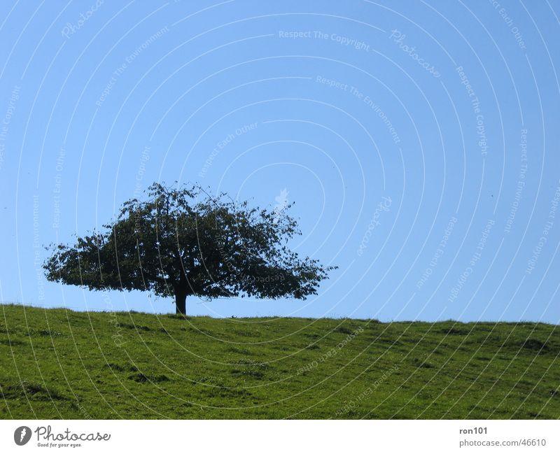TREE Tree Meadow Field Green Leaf Calm Sky Blue Tree trunk