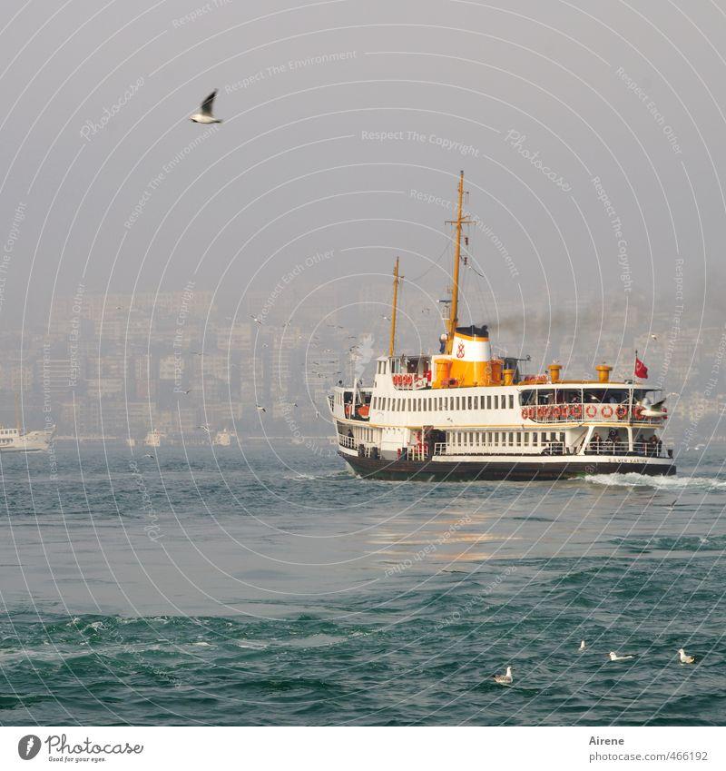 Vacation & Travel Blue White Ocean Animal Movement Bird Orange Waves Fog Tourism Esthetic Logistics Navigation Traffic infrastructure Seagull