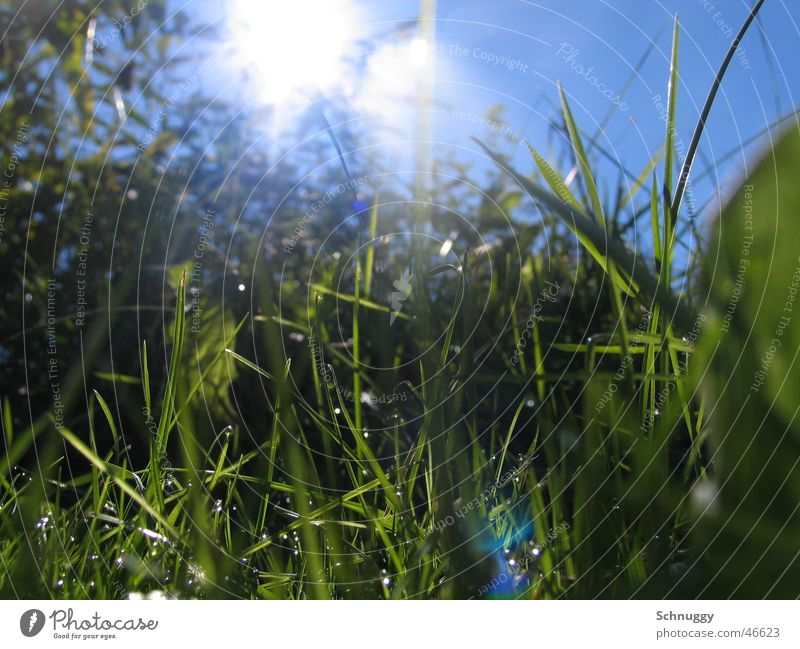 Juicy grass Grass Meadow Fresh Macro (Extreme close-up) Worm's-eye view Life alive Reflection