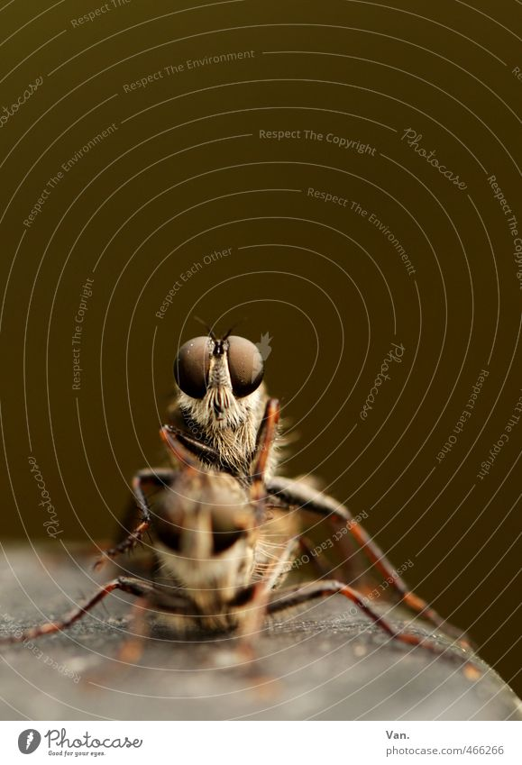 voyeur² Nature Animal Wild animal Fly Animal face Insect Eyes 2 Sex Brown Propagation Colour photo Subdued colour Exterior shot Close-up